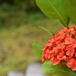 Flora of Nicaragua